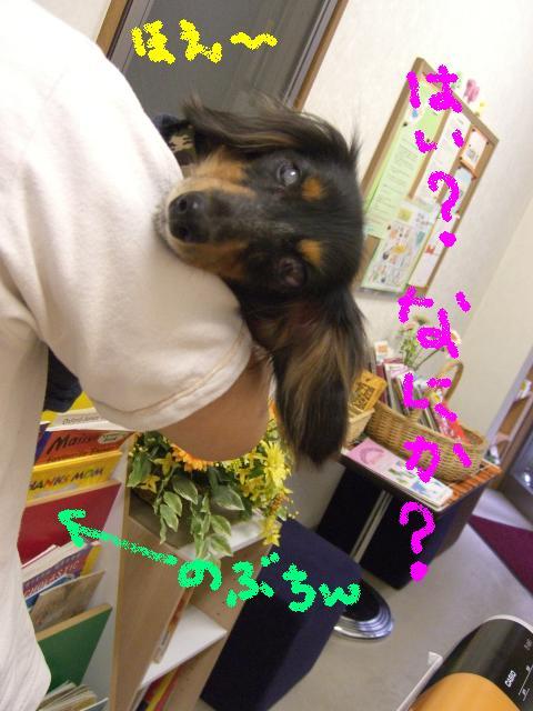 Tsubasa_9_26_1
