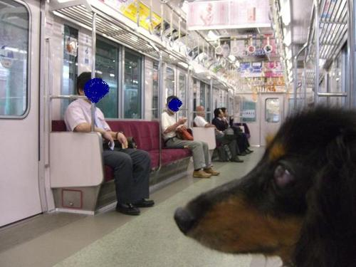 Tsubasa_train3